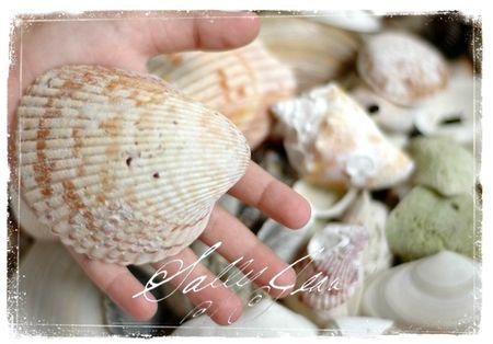 Shell50Hand