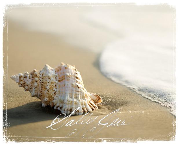 Shell48Shore