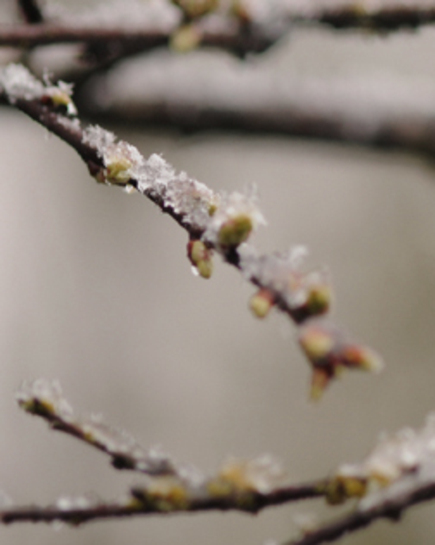 Snowbranch3